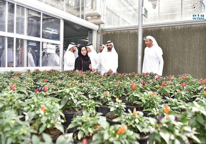 Plant Nurseries In Bur Dubai Thenurseries