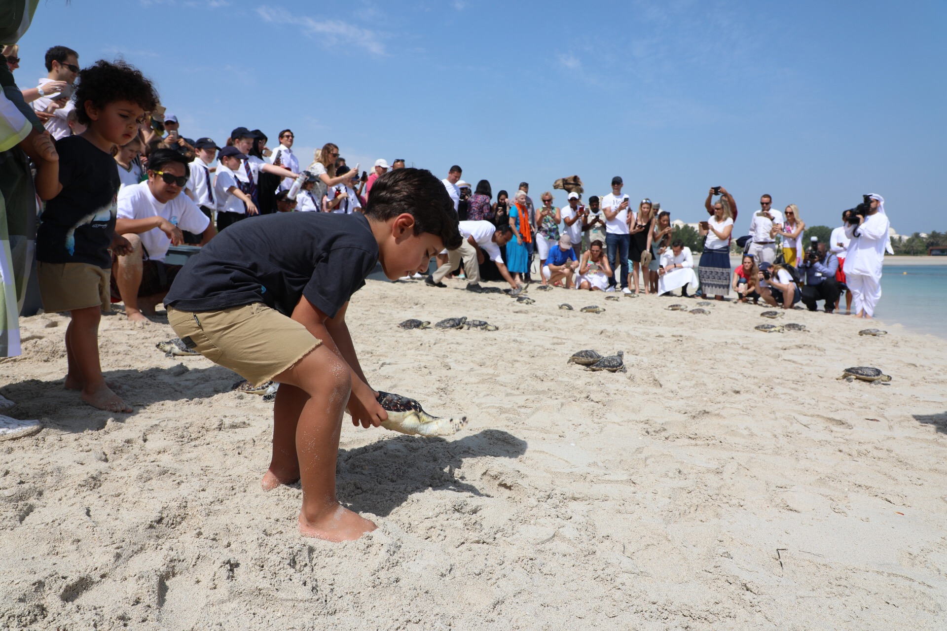 50 successfully rehabilitated sea turtles released for endangered species day 4