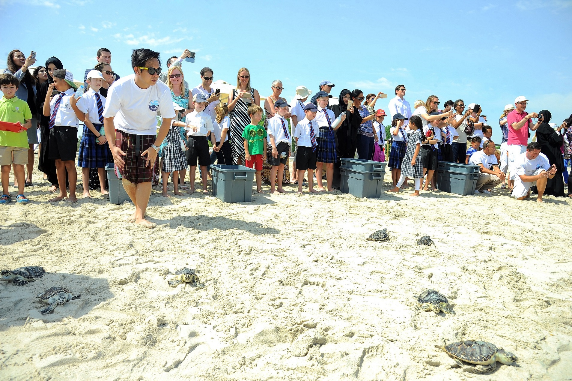 50 successfully rehabilitated sea turtles released for endangered species day 2