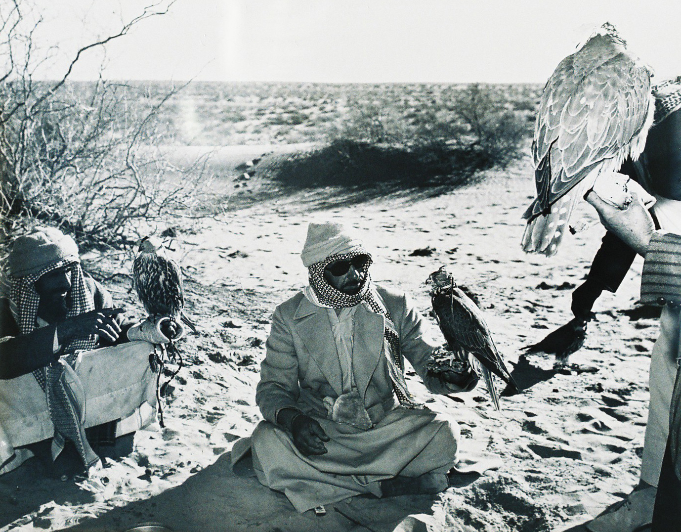 sheikh zayed first falconer and nature protector (3)