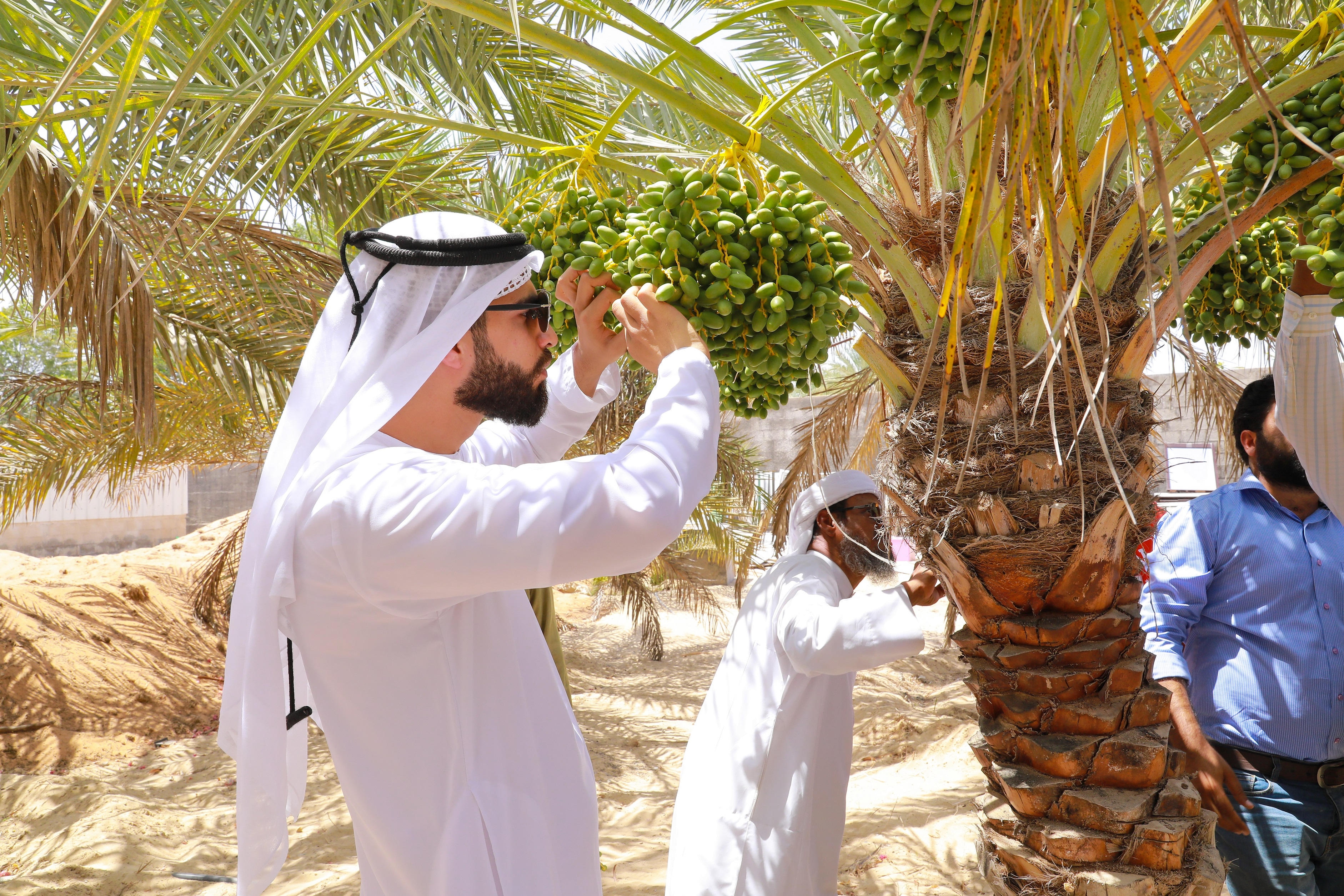 adafsa carries out 130,000 extension visits to over 22,000 farms within 6 months 2