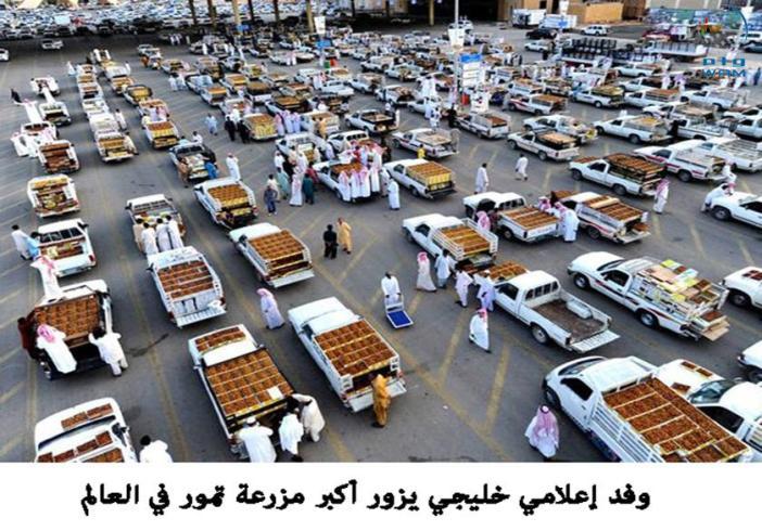 وكالة أنباء الإمارات - وفد إعلامي خليجي يزور أكبر مزرعة تمور في العالم