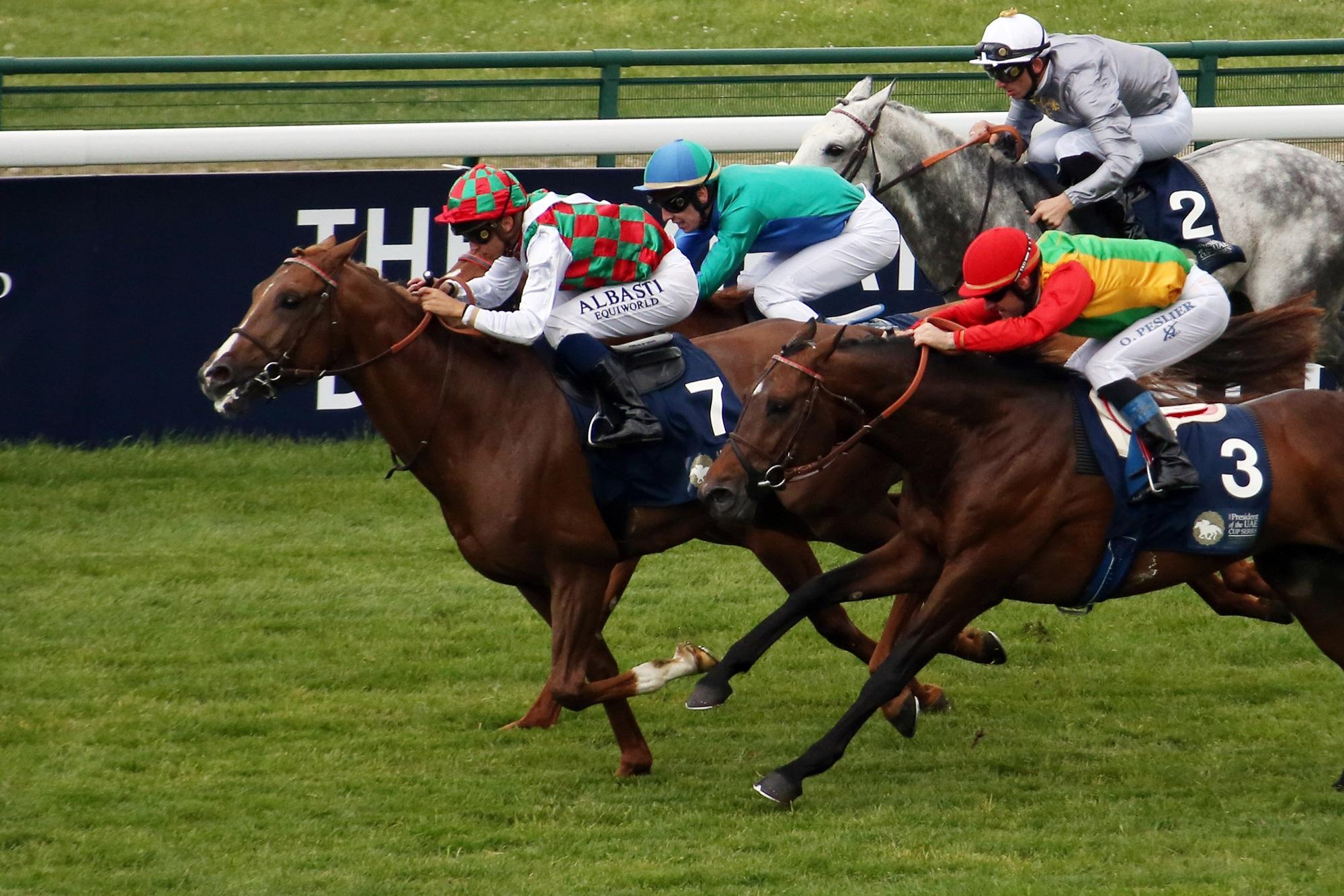 بلجيكا تستضيف المحطة الخامسة لكأس رئيس الدولة للخيول العربية الأصيلة غدا. 3