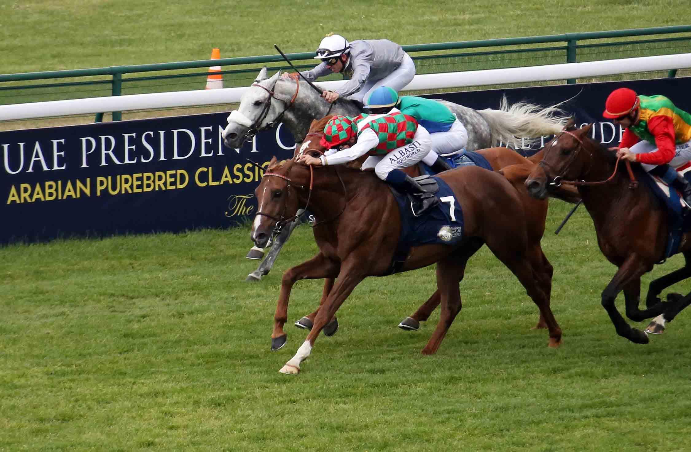 كأس رئيس الدولة للخيول العربية يبدأ أولى محطاته الأوروبية من فرنسا غدا