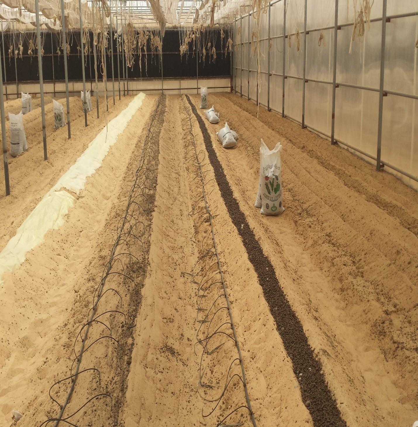 """""""الزراعة و السلامة الغذائية"""" توعي بأهمية التعقيم الشمسي لتحسين خواص التربة"""