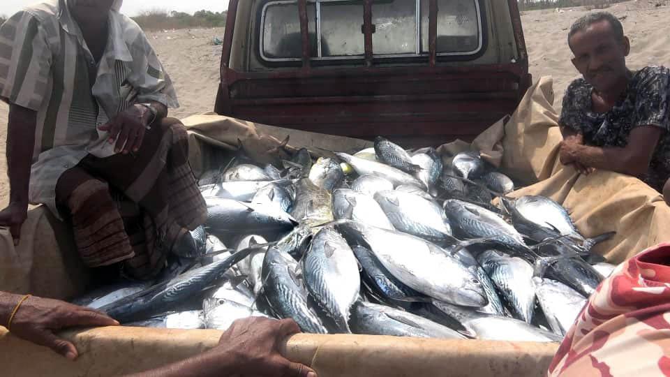 """بدعم إماراتي .. افتتاح مركز للإنزال السمكي بـ"""" المتينة """" في الساحل الغربي اليمني"""