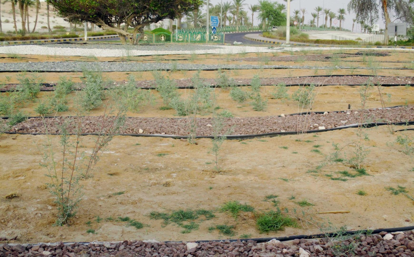قطاع مدينة ليوا يطلق عدة مبادرات للحفاظ على النباتات البرية