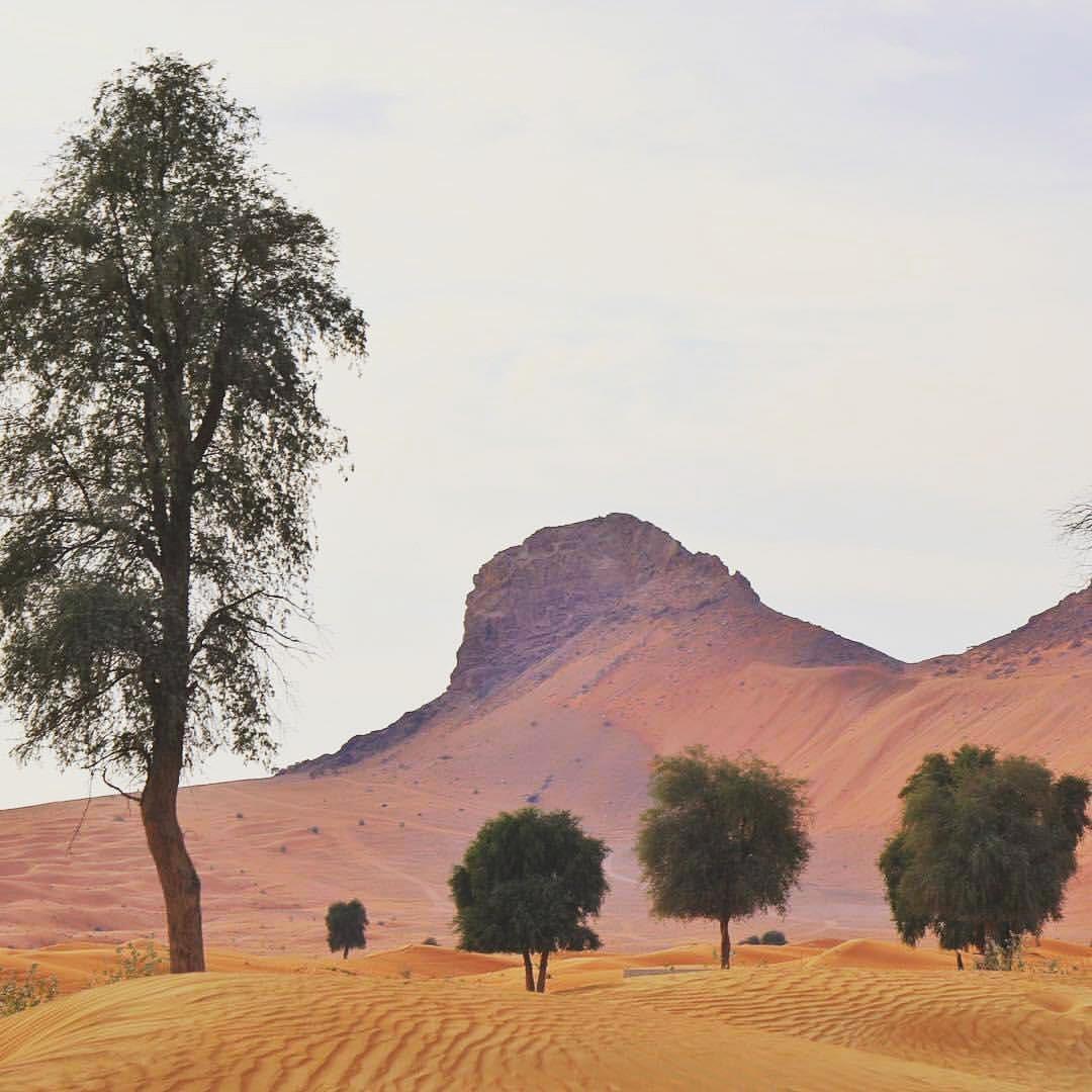 الأشجار المعمرة في الإمارات .. روح المكان و ذاكرة الزمان