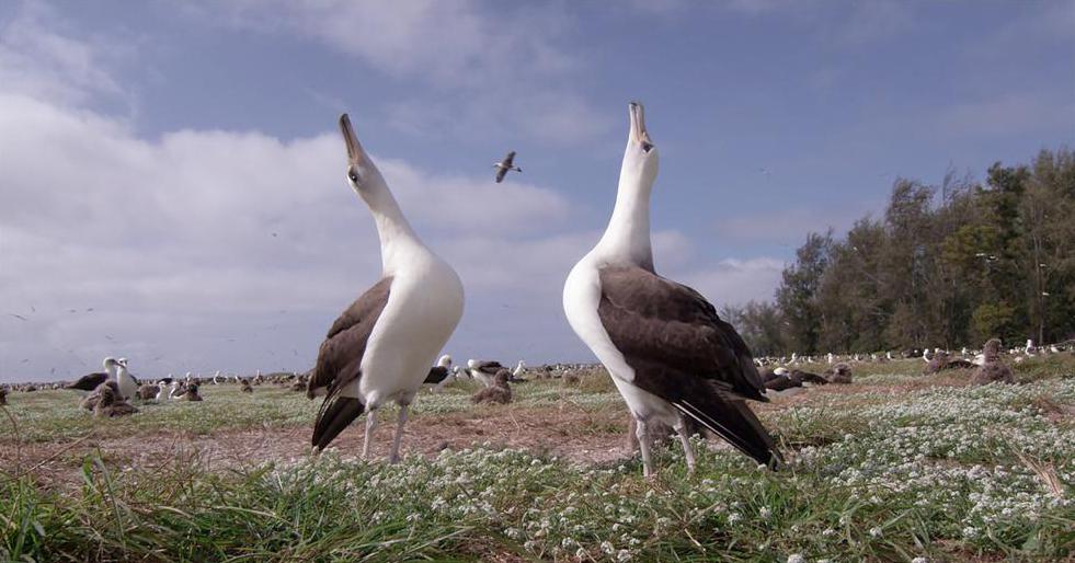 """انطلاق """"مهرجان السدر للأفلام البيئية"""" في أبوظبي 6 فبراير"""