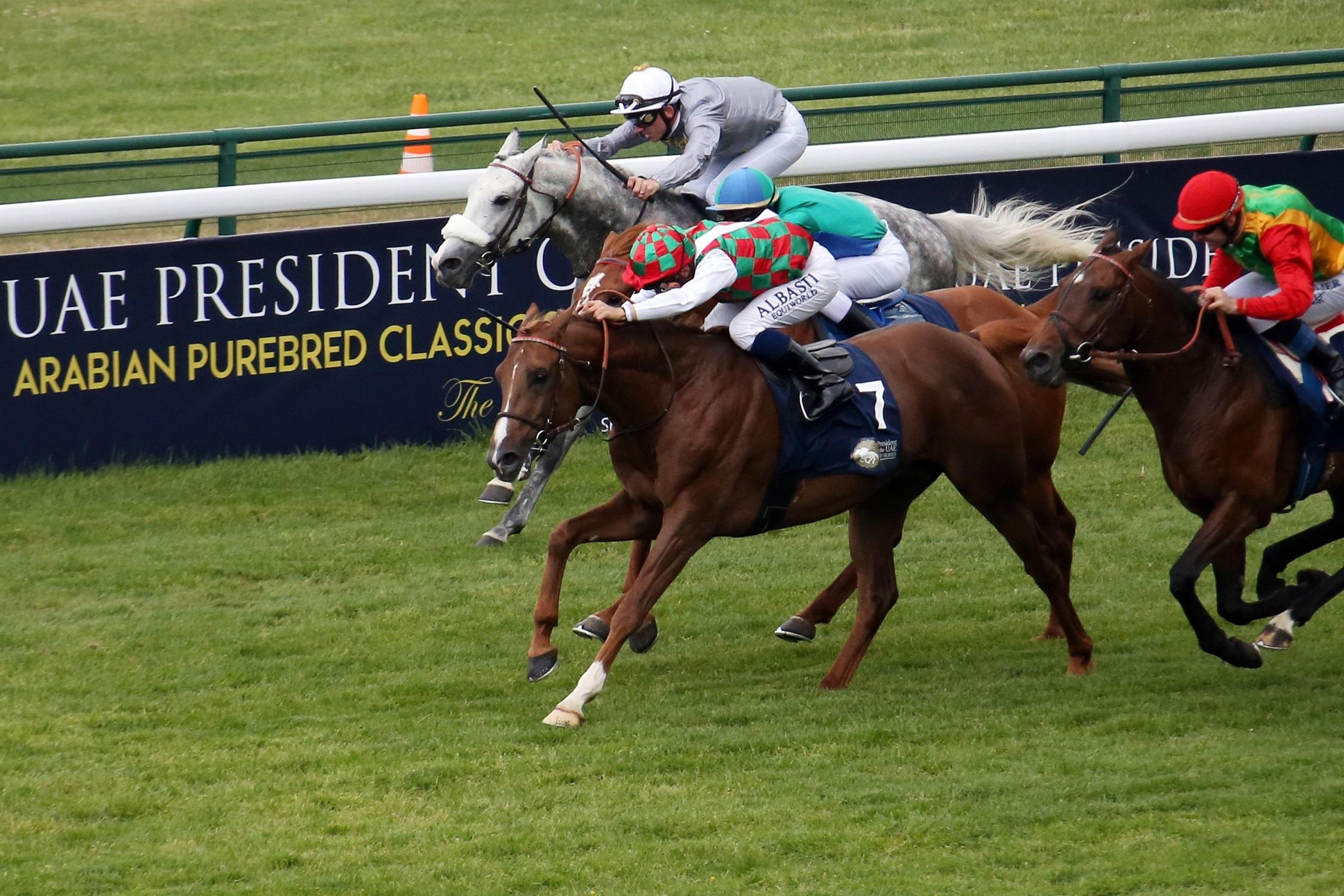 غدا .. انطلاقة النسخة الـ27 من كأس رئيس الدولة للخيول العربية الأصيلة في فرنسا
