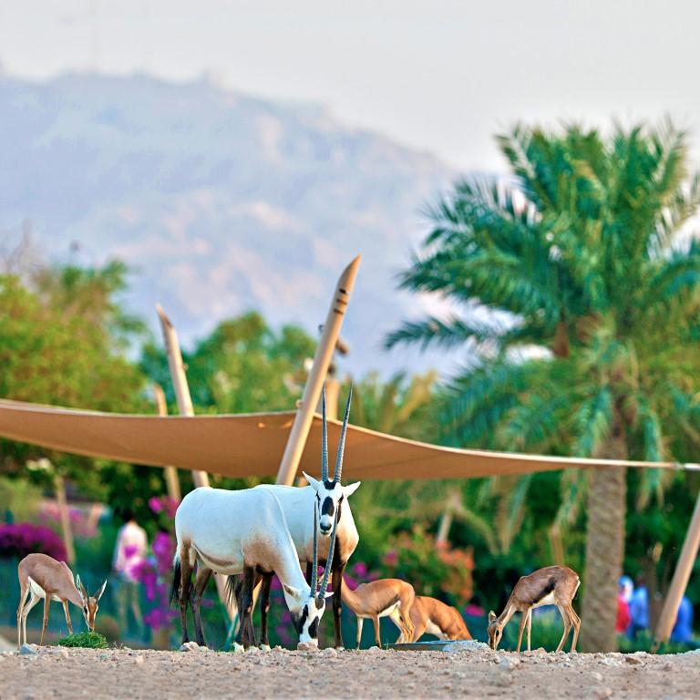 حديقة الحيوانات بالعين تشارك في المعسكرات الافتراضية