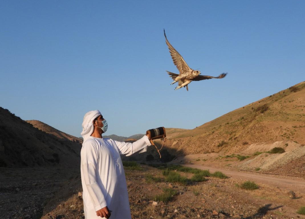 دورة استثنائية لبرنامج الشيخ زايد لإطلاق الصقور