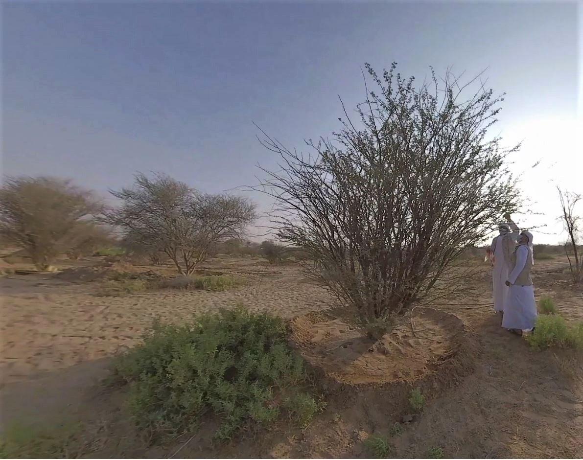 """""""بيئة أبوظبي"""" تعيد تأهيل موائل السمر المحلي في متنزه جبل حفيت الوطني"""