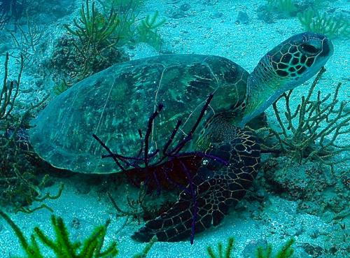 تقرير/ المحميات البحرية في الفجيرة... بيئة زاخرة بالحياة الفطرية