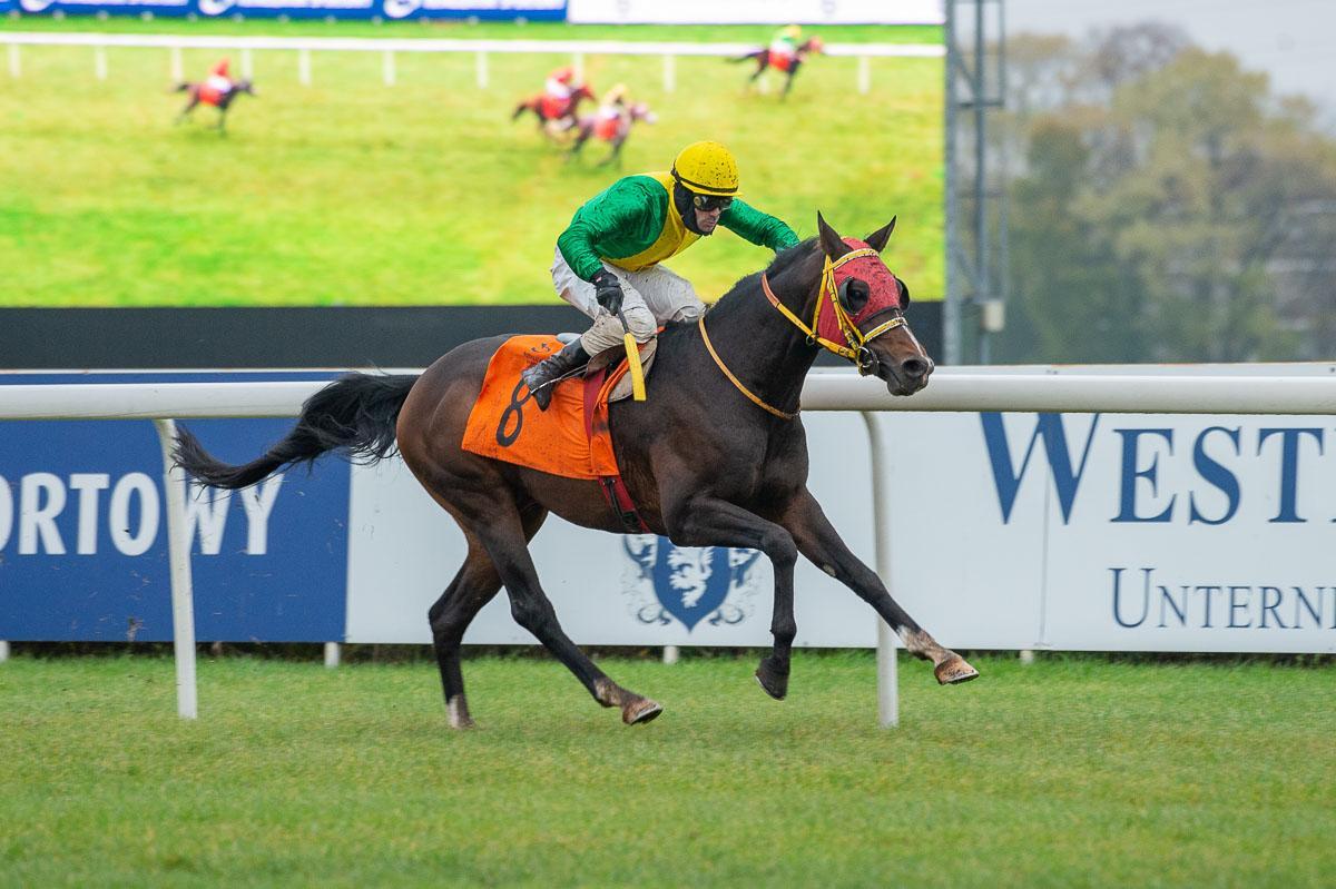 رئيس الاتحاد الدولي لسباقات الخيول العربية: الإمارات تقود المنظمة الدولية إلى حقبة ذهبية بدعم منصور بن زايد