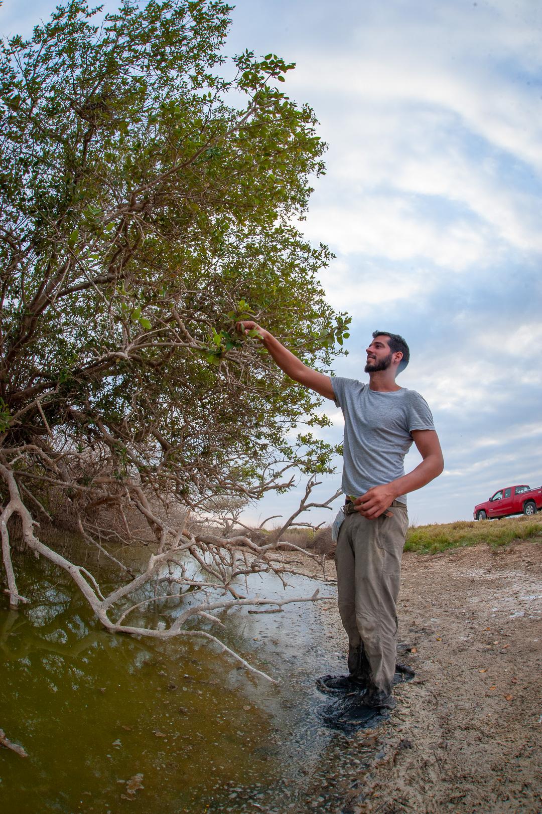 """باحثو """"نيويورك - أبوظبي"""" ينجزون دراسة حول التركيب البيولوجي لأشجار القرم"""