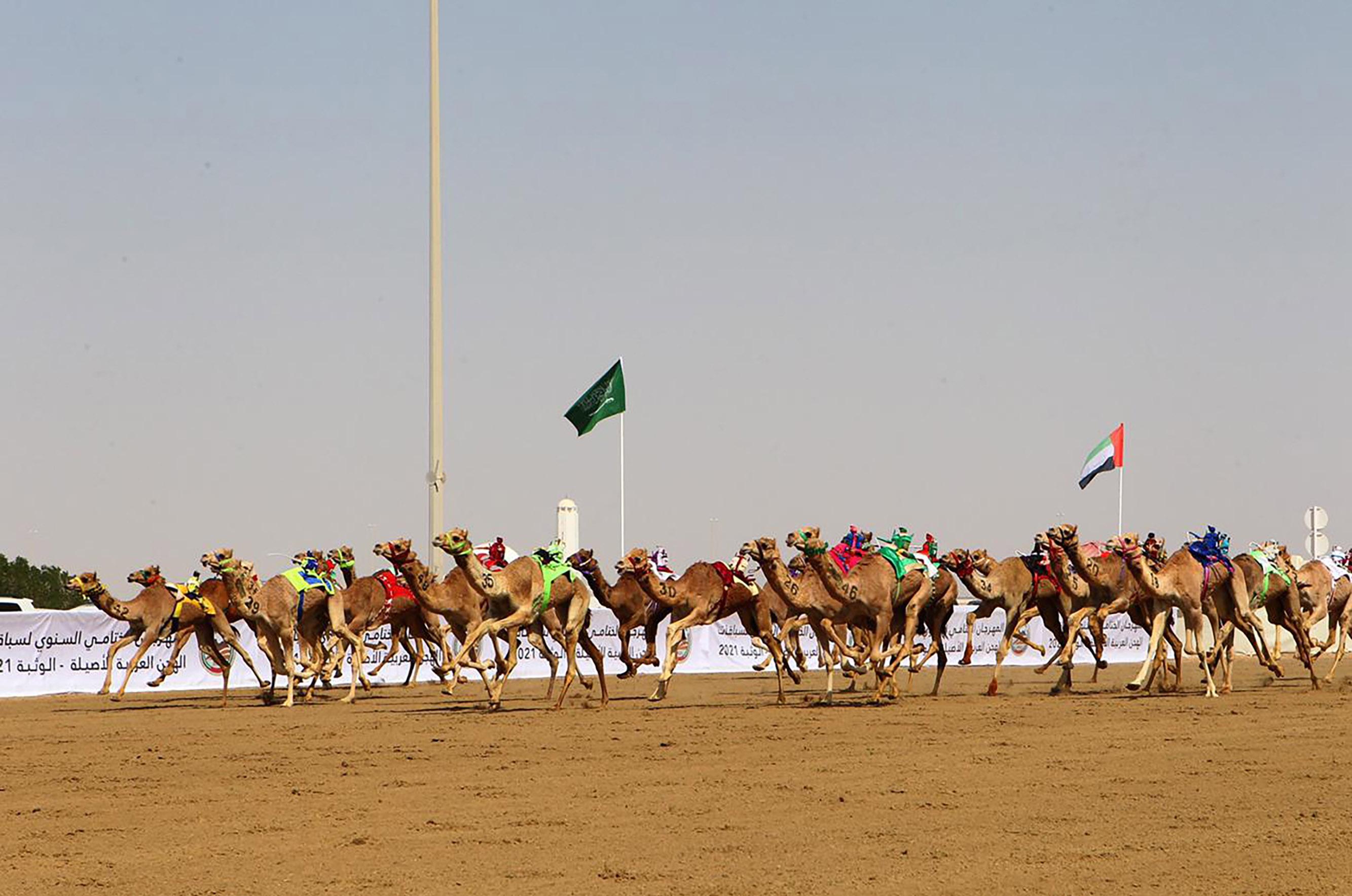سلطان بن حمدان يشهد انطلاقة منافسات المهرجان الختامي السنوي لسباقات الهجن