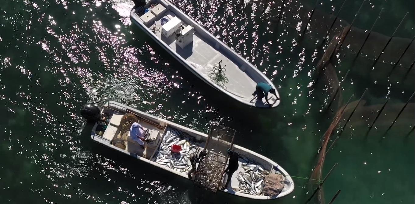 fisheries documentary  (3)