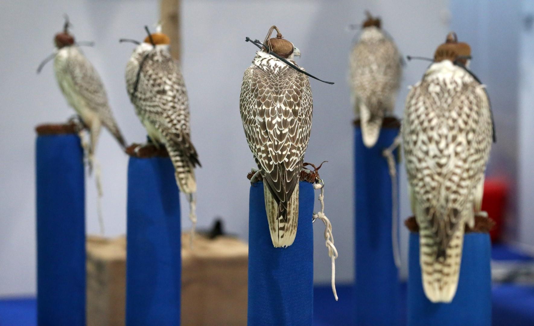 """""""أبوظبي الدولي للصيد والفروسية""""يطلق باقة من المسابقات"""