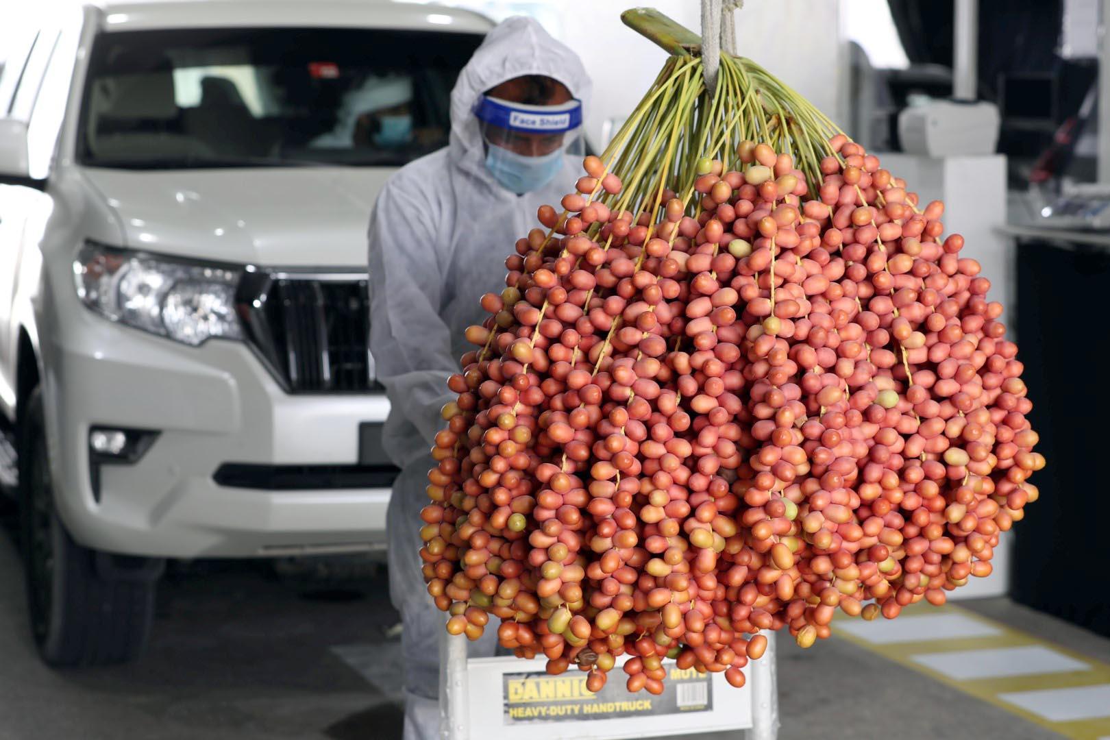 برعاية منصور بن زايد .. انطلاق مهرجان ليوا للرطب