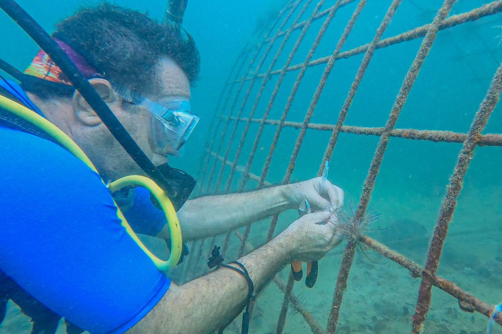 """""""بيئة الشارقة """" تبدأ تنفيذ مشروع استزراع الشعاب المرجانية في الحمرية"""