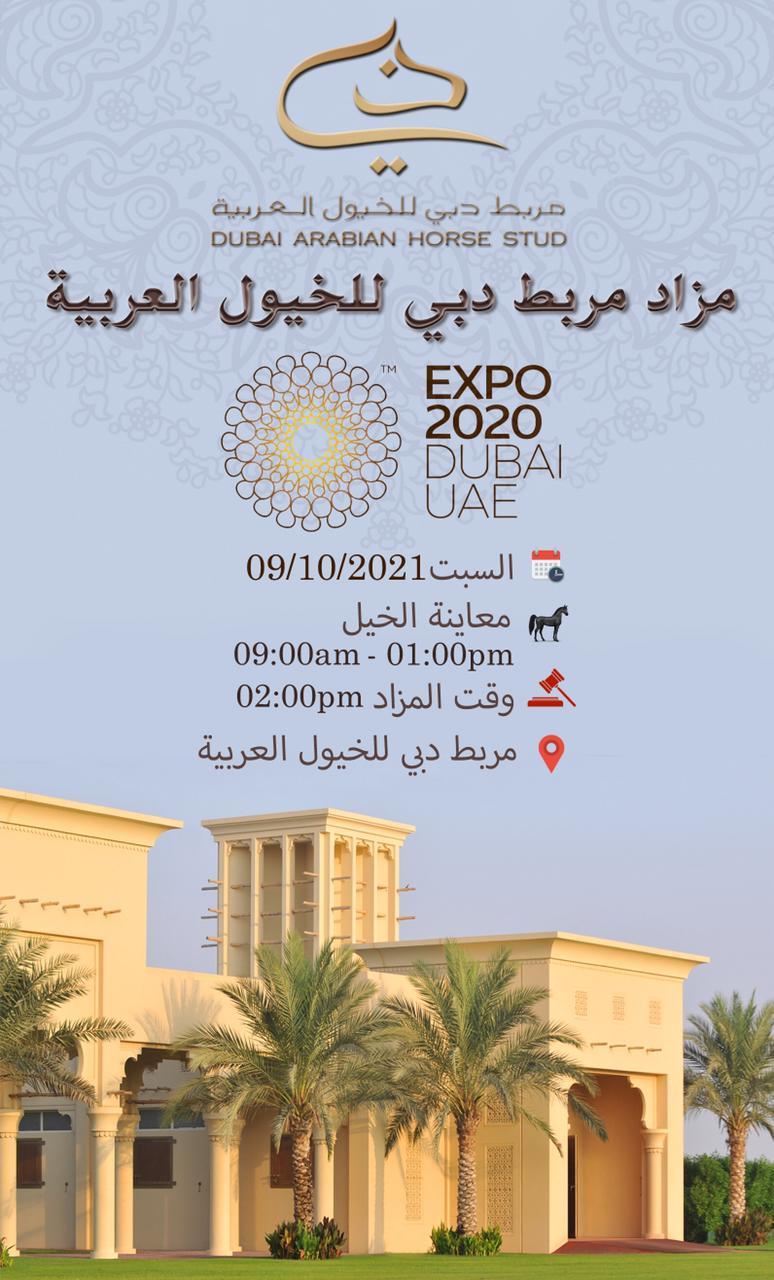 "مربط دبي يقيم مزادا للخيول مع انطلاق ""إكسبو 2020"""