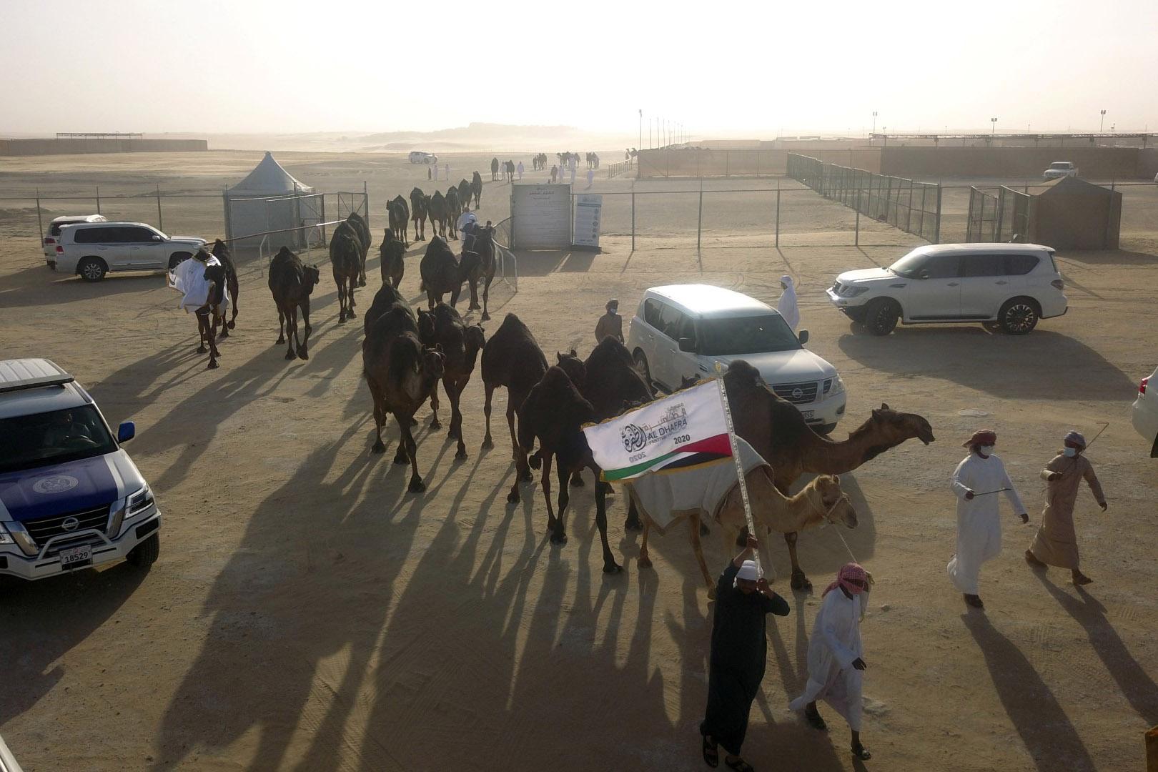 """""""لجنة إدارة المهرجانات"""" تكشف عن جائزة """"بيرق الإمارات"""" بقيمة ستة ملايين درهم"""